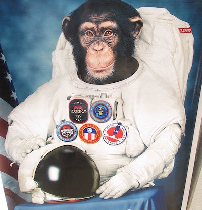 first monkey in space