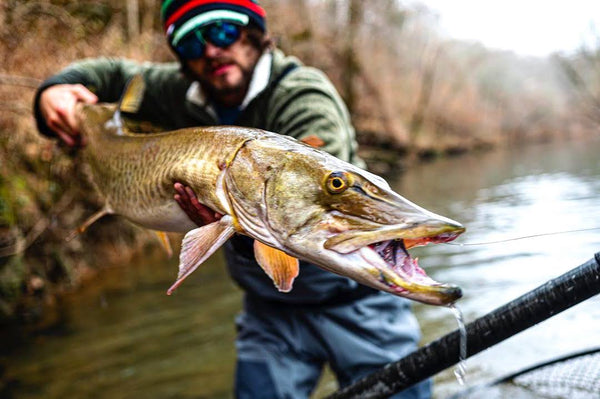 River Fishing for Muskies