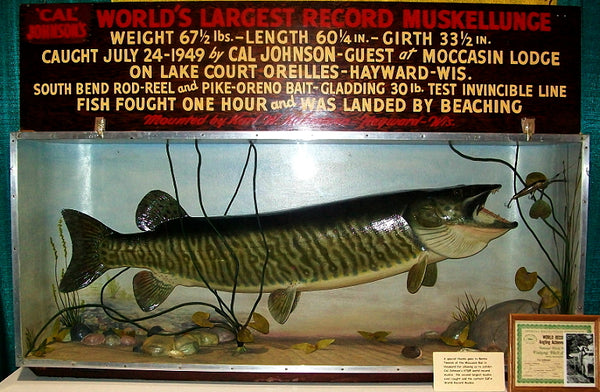 World Record Muskie