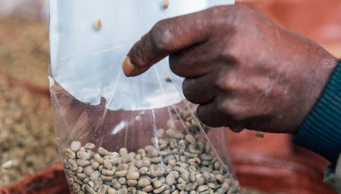 Man Processing Coffee Beans