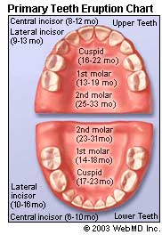 Baby teeth eruption chart from Web MD