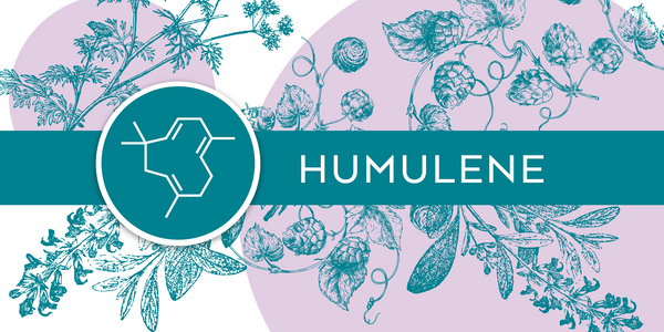Terpene Tuesday: Humulene