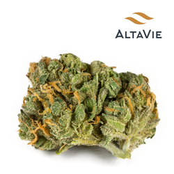 Alta Vie Cabaret (Sweet Island Skunk) Sativa Dried Flower