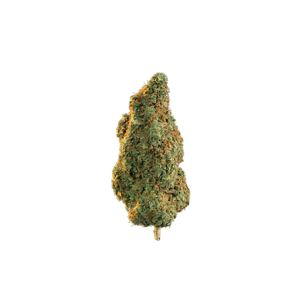 Edison Casa Blanca (Mongolian) Indica Dried Flower