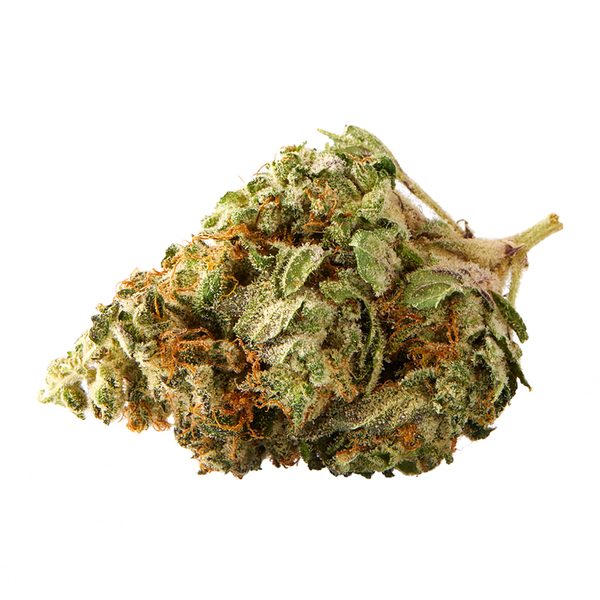 Sundial Citrus Punch (Agent Orange) Sativa Dried Flower