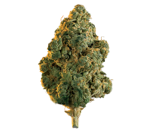 Edison Lola Montes (Hash Plant) Indica Dried Flower