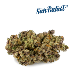 San Rafael '71 Purple Chitral Indica Dried Flower