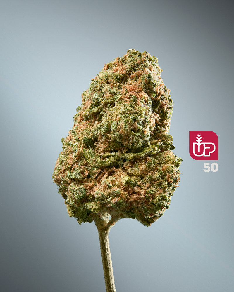UP 50 Dried Flower (OG Kush)