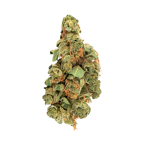 Daily Special Sativa Dried Flower