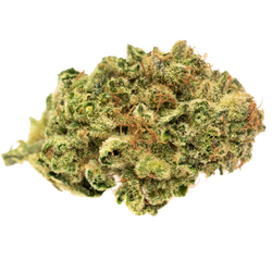 Solei Gather (Jack Herer) Dried Flower