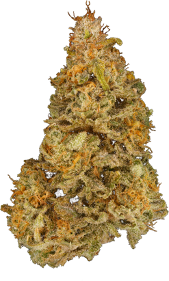 Vision Qwest (Strawberry Cough) Sativa Dried Flower