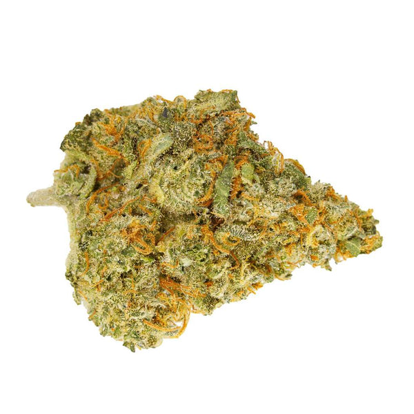 Whistler Chocolope Sativa Dried Flower