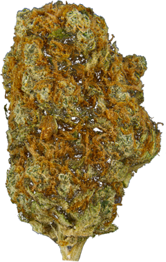 Zest Qwest (Super Lemon Haze) Sativa Dried Flower