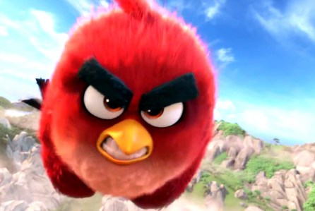 red angry bird gros plan zoom