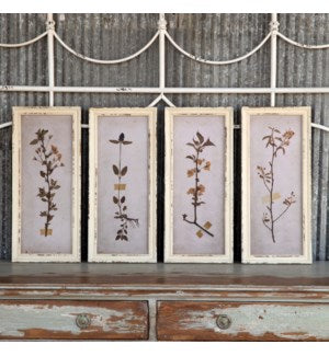 Pressed Botanical Prints