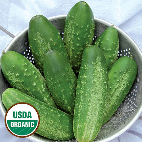 Russian Pickling Cucumber Seeds
