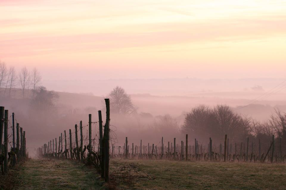 Shotley Vineyard Tours - Coming Soon