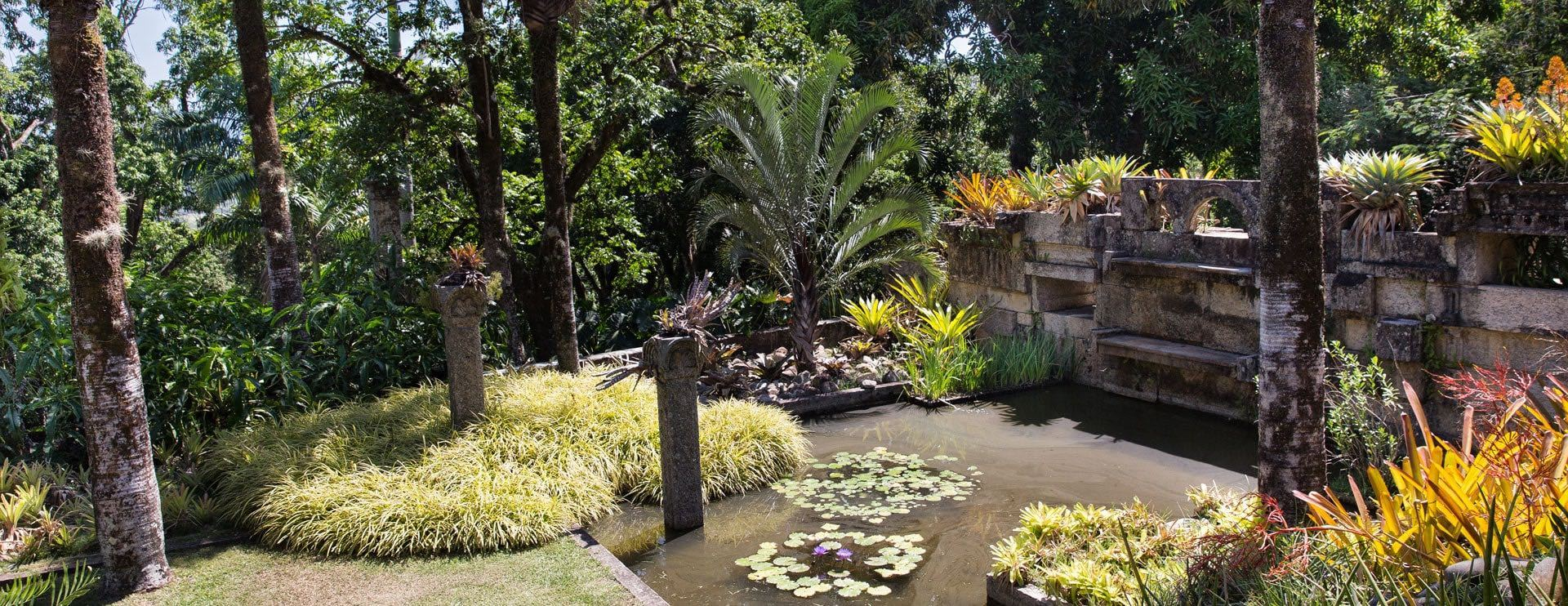The Living Art of Roberto Burle Marx at New York Botanical Garden
