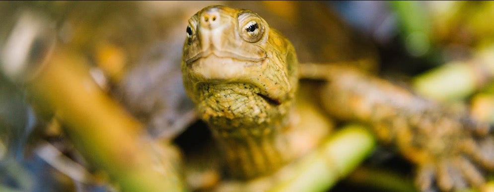 How Natura's Ekos Andiroba Bath & Body Products Help Turtles in the Amazon