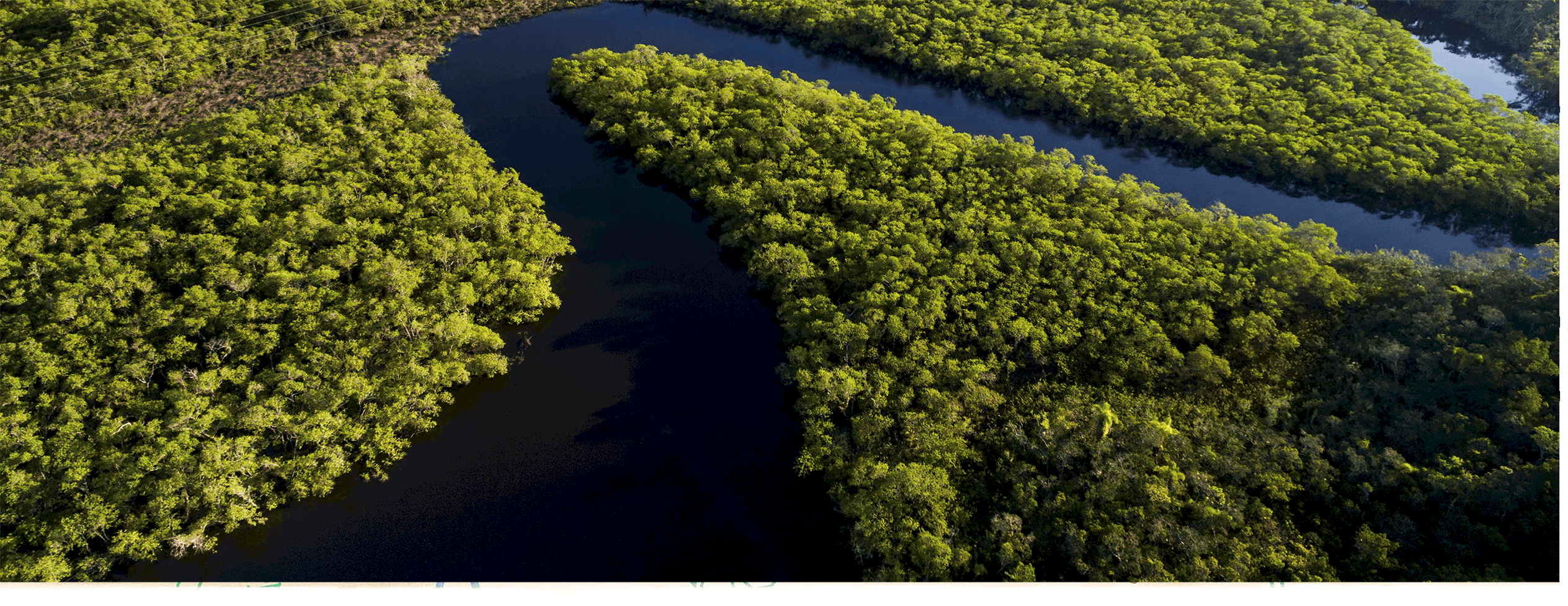 Why the Amazon Matters