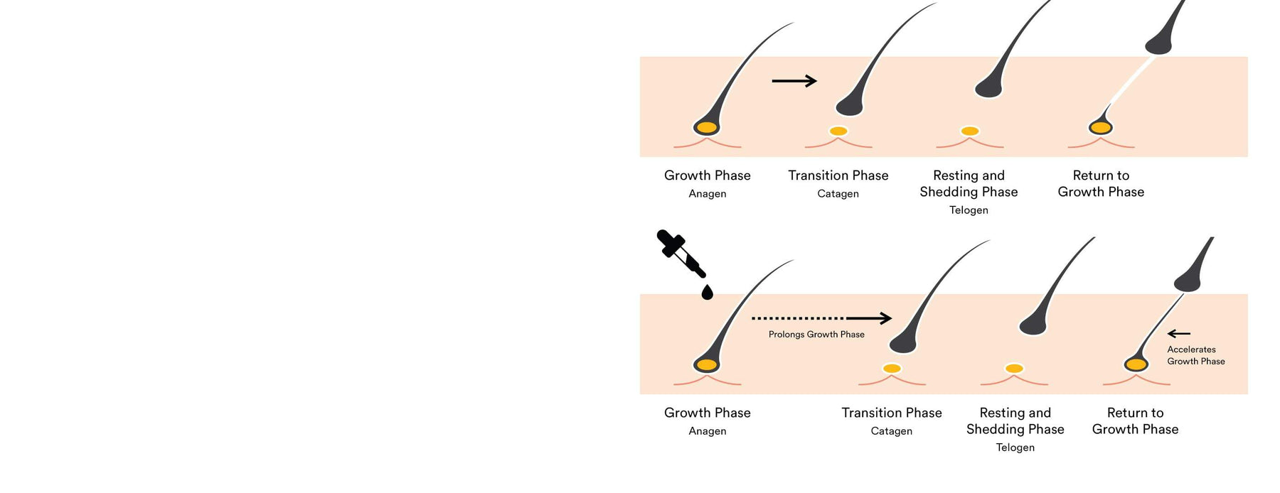 how pataua hair tonic works