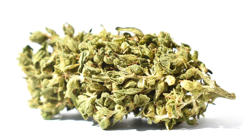 Jack Herer Outdoor 14% CBD 10Gr=50€!