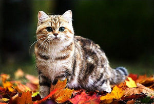 Adorable Cat on Autumn Leaves Diamond Painting