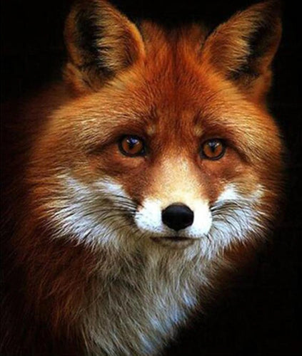 Adorable Red Fox Paint by Diamonds
