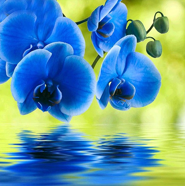 Beautiful Blue Orchids Paint by Diamonds