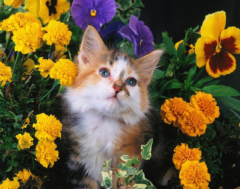 Beautiful Cat & Yellow Flowers Diamond Painting