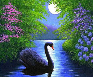 Black Swan in Water Diamond Painting