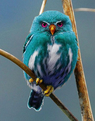 Blue Owl of Madagascar Paint by Diamonds