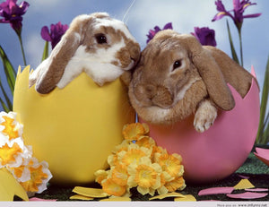Bunnies in Easter Eggs Diamond Painting