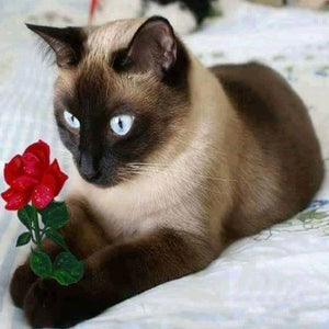 Cat with Red Rose Diamond Painting Kit