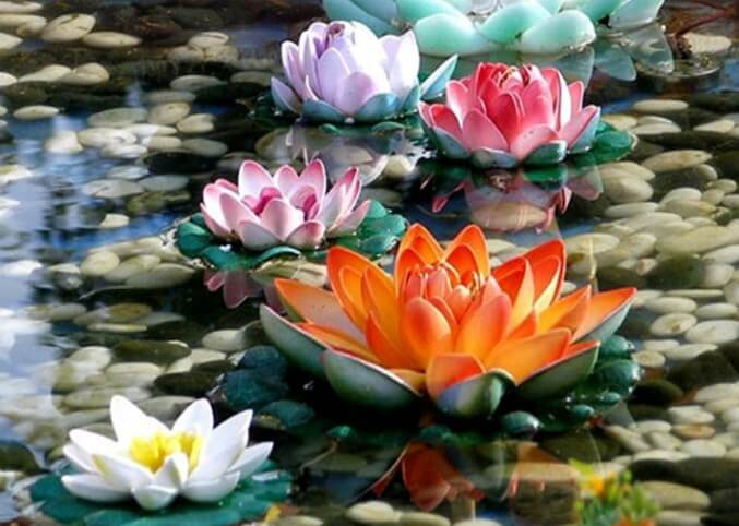 Colorful Lotus Paint by Diamonds