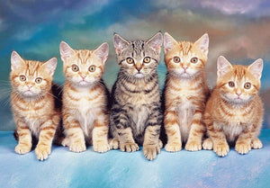 Cute Group of Cats Paint by Diamonds