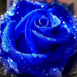 Diamond Blue Rose Painting Kit