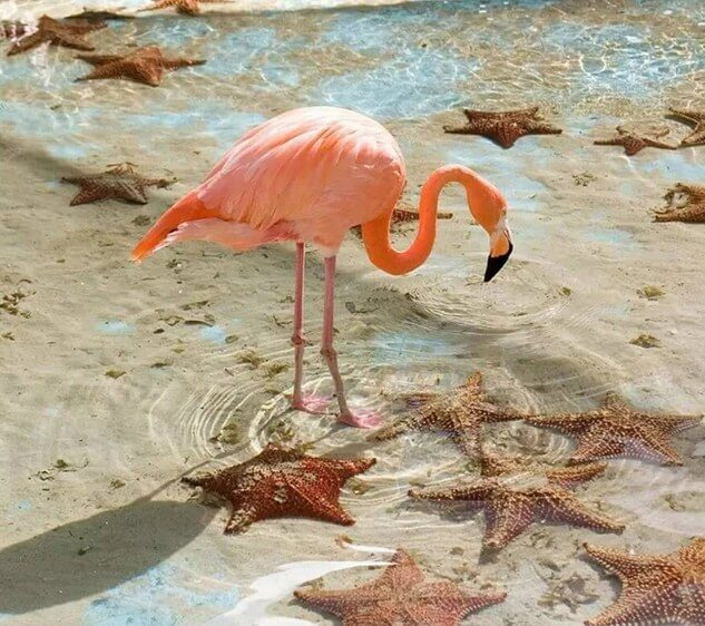 Flamingo Paint by Diamonds