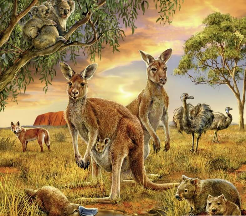 Australian Animals Painting Kit