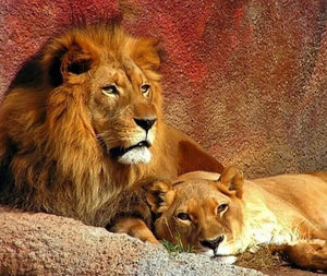 Lion Pair Painting Kit
