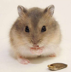 Hamster Diamond Painting Kit
