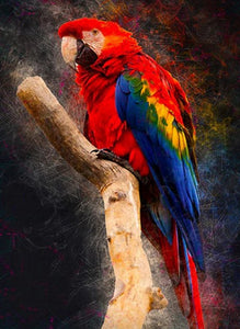Macaw Parrot Paint by Diamonds