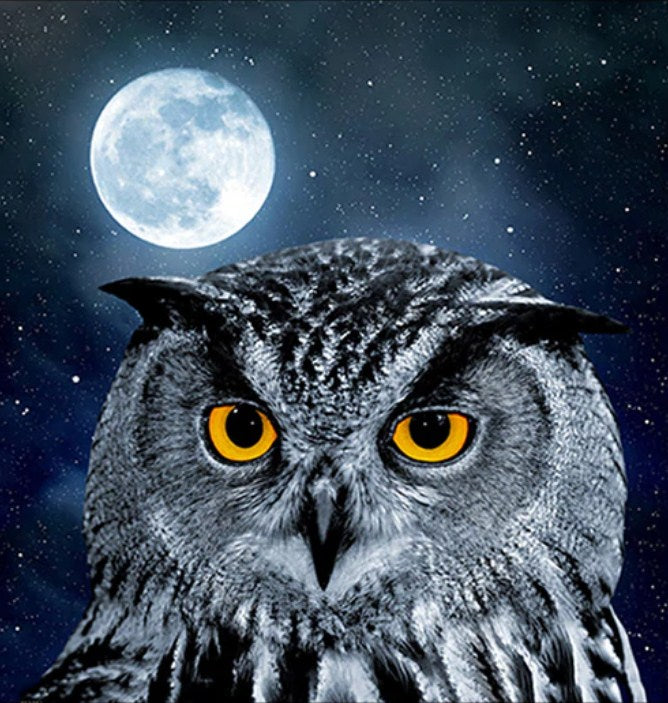Owl & Full Moon Night Diamond Painting Kit