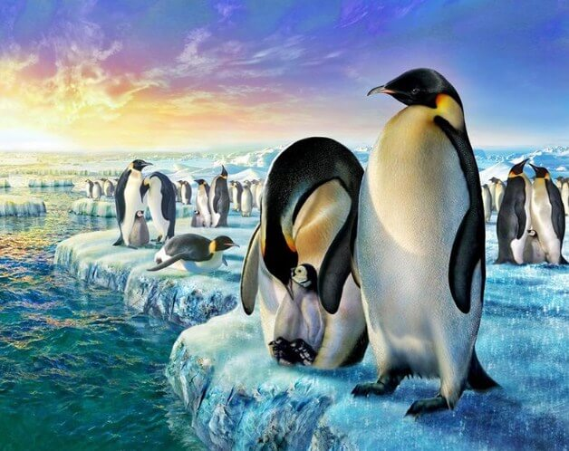 Penguins Paint by Diamonds