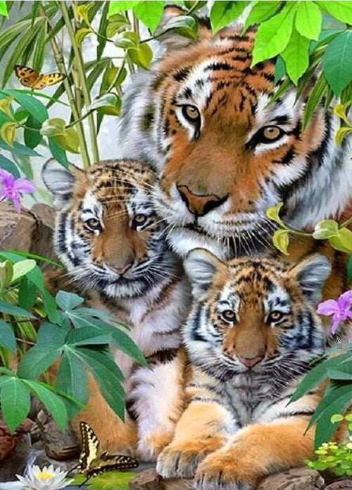 Tiger & Adorable Cubs Paint by Diamonds
