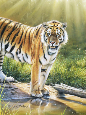 The Chitwan Tiger