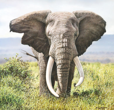 East Africa's Super Tuskers