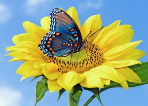 Yellow Sunflower & Blue Butterfly Diamond Painting