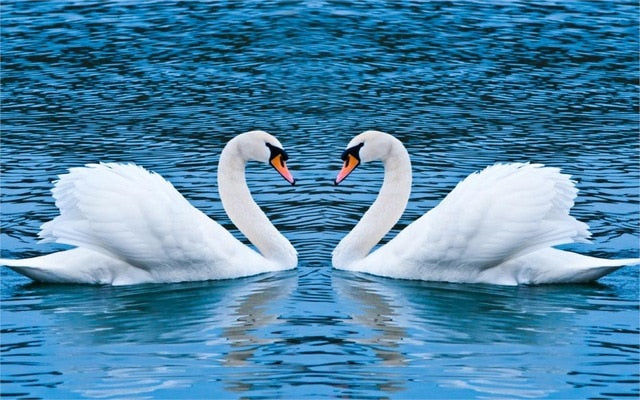 Swans Diamond Painting Kit