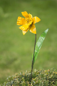 Daffodil Recycled Metal
